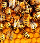 Simple steps of starting beekeeping at home